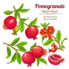 pomegranate branches vector set
