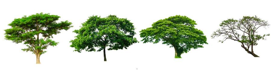 Set of tree isolated white background.
