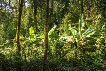 Nature woodland