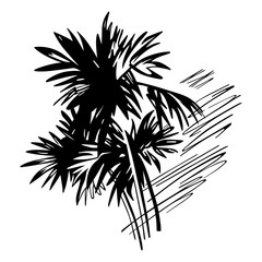 Tropical palms illustration