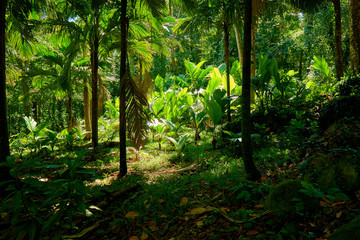 beautiful tropical forest of seychelles