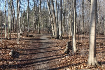 A sunny day on the trail in the park forest.