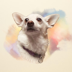 Portrait of White Corgi dog. Cute puppy on watercolor background. Hand drawn illustration of Dog. Watercolor Animal collection: Dogs. Good for print T-shirt, banner, cover, card. Art background