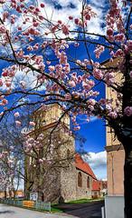 Sabinenkirche im Frühling