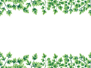 Green parsley leaves at the borders of the illustration on the top and bottom. Inside an empty white background.
