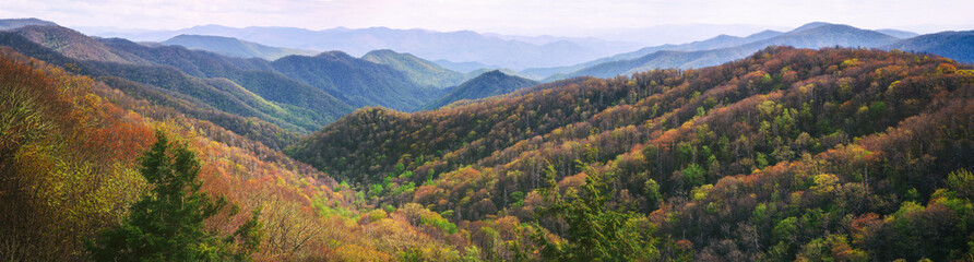 Wide Wilderness Panorama Background. Great Smoky Mountains.