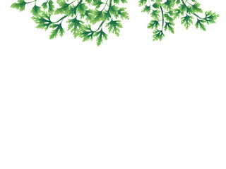 Green parsley leaves at the borders of the illustration on the top. Inside an empty white background. The vegetation grows on top. Hanging leaves and branches.