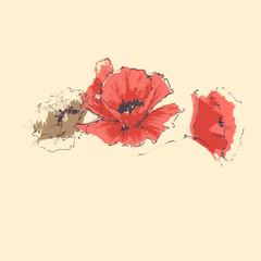 Fototapete - Red poppy anniversary card