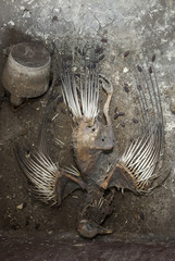Skeleton of a death pigeon in the sink of an abandoned building