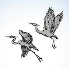 Stork. Vector drawing