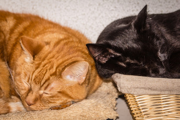 a red cat and a black cat sleeping
