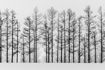 streszczenie czarno-białe drzewo - 195900132