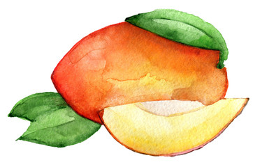 watercolor sketch of mango isolated on white background