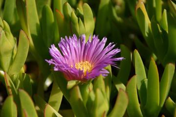 Purple flower blooming among green leaves