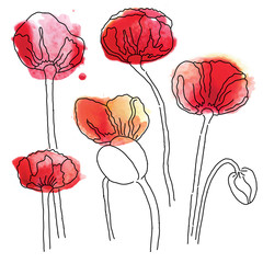 vector red poppy bouquet