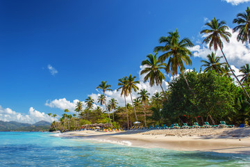 perfect empty Caribbean sandy beach with clear water and green palm trees