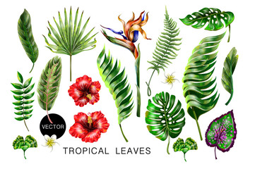 Set of realistic tropical flowers and leaves for your design.