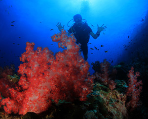 Scuba divers explore coral reef and fish