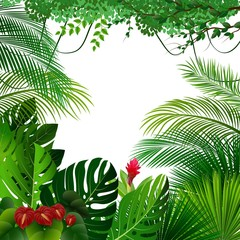 Tropical jungle background