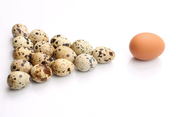 spotted quail eggs near chicken egg on white background.