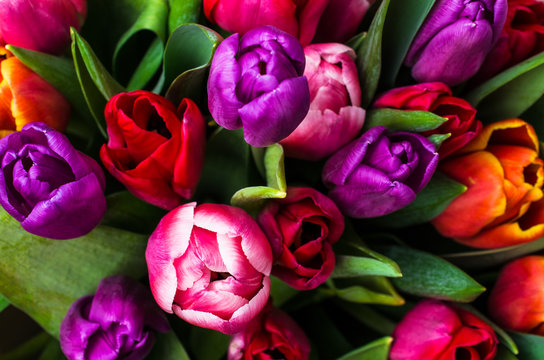 Background from multi colored tulips