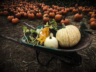 Pumpkin twilight
