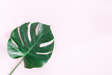 Monstera leaf. Green tropical leaf on pink background. Flat lay, top view, copy space