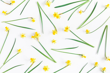 Flowers composition. Spring narcissus flowers on white background. Flat lay, top view