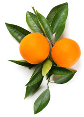 Wall Mural - Twig of orange with fruits.