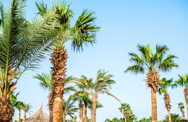 tree of palm trees blue sky
