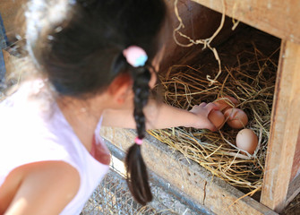 Child keeping eggs lie on the hay in wood box in farm.