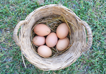 Many Chicken eggs in basket. Top view.
