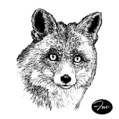 hand drawn ink fox on white background. sketch.
