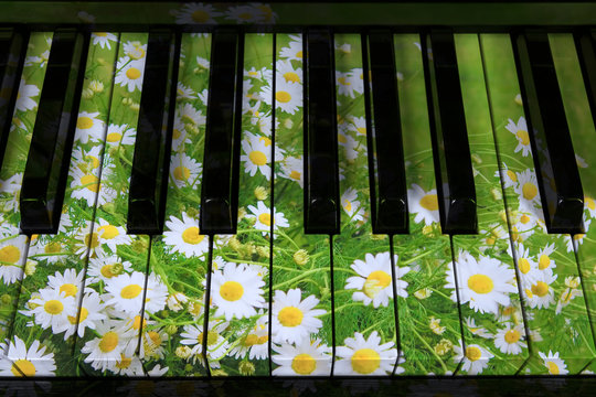Piano keys in the decor of spring and flowers