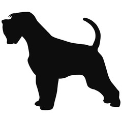 terrier black silhouette. Illustration of dog