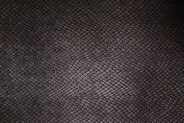 texture reptile skin background image, close-up photo
