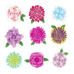 Flower set. Beautiful coloured flowers and leaves isolated on white background. Vector illustration. Clipart, icons.