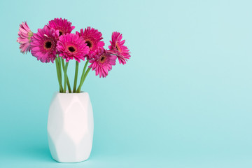 Happy Mother's Day, Women's Day, Valentine's Day or Birthday Pastel Candy Blue Coloured Background. Dark pink gerberas in a vase.