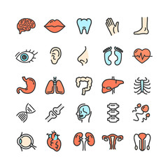 Human Organs Color Thin Line Icon Set. Vector