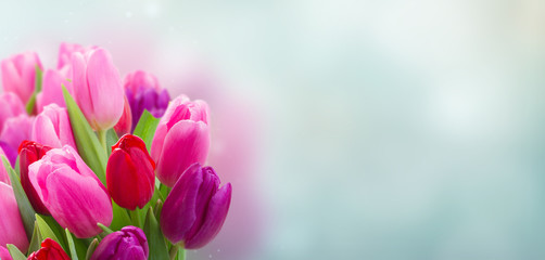 Foto op Canvas Tulp bouquet of pink and purple tulip flowers