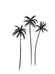 Palm trees black and white illustration