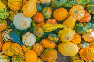 Harvest pumpkins of different shapes, background, texture