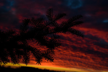 Silhouette of Pine Tree Branch against Purple and Pink Horizon