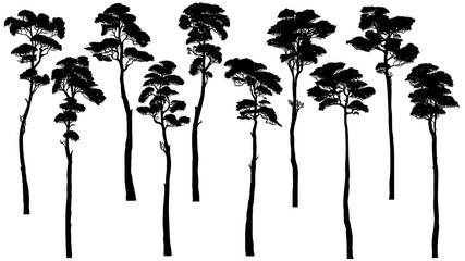 Silhouettes of tall trees with leaves (pine, cedar, sequoia).