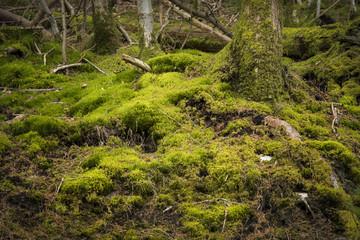 Rural winter woodland, Wales,UK