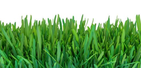 Green grass. Natural grass texture pattern background. Meadow. Spring, summer season. Plant growth 3d rendering