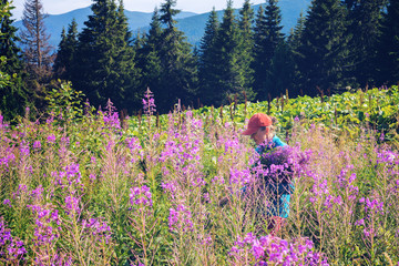 Woman collects pink wildflowers on a mountain meadow