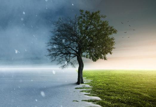Baum steht halb im Winter und halb im Frühling