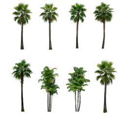 Green palm tree on white