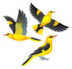Stylized Birds - Indian Golden Oriole